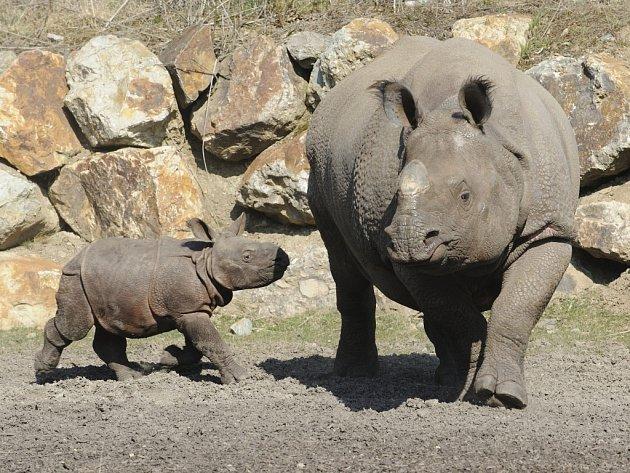 Maruška s maminkou Manjulou ve vnějším výběhu