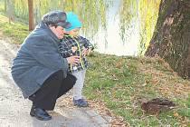 HOŘEJŠÍ OBORA do zelené páteře města patří. Na snímku Zdeňka Zevelová krmí s vnukem kačeny.