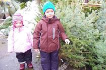 Vánoce patří především dětem a někteří rodiče berou své ratolesti s sebou, aby si samy vybraly ten nejhezčí stromek