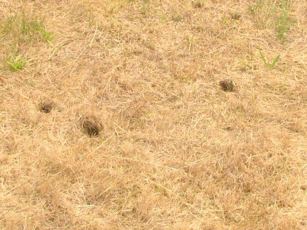 Díry vzemi na školním hřišti.