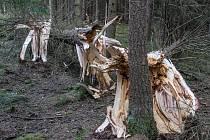 Následky přechodu hluboké tlakové níže Eberhard v lesích na Příbramsku.