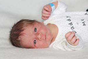 Josef Veselý z Dobříše, narozený 11. května 2019, 3650 g, rodiče Petra a Josef, sourozenci Valerie (10) a Viktorie (9).