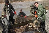 Výlovem Malého kotelského rybníku ukončili v sobotu rožmitálští rybáři letošní sezonu. Tu naopak zahájili výlovem Velkého kotelského rybníku v Hutích pod Třemšínem už na jaře.