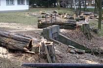 Technické služby kácejí především stromy, které jsou nemocné, například prohnilé či seschlé, a mohly by být nebezpečné.