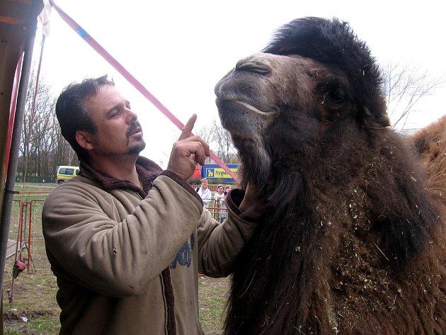 Zástupce ředitele cirkusu Maik Doubek s velbloudem
