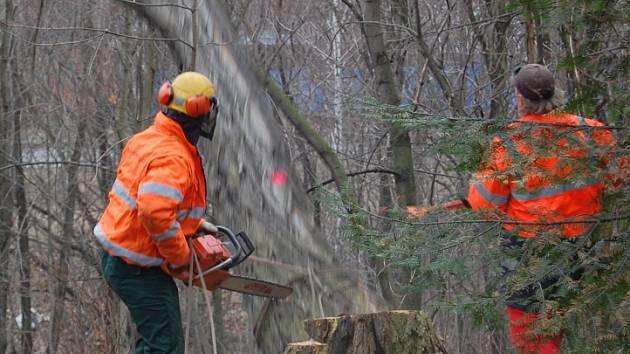 Ulice Podskalí je již bez nebezpečných stromů