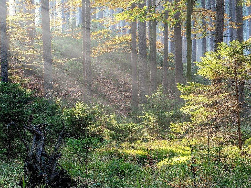 CHKO Brdy - podzim.