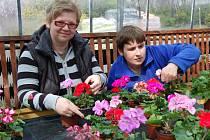 Zahradnice Lucie Čornyjová a Monika Kroupová v zahradnictví Petunia.