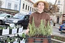 Tereza Cendelínová přijíždí do Příbrami s bylinkami z Písku.