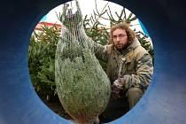 Prodej stromků u Kauflandu v Příbrami.