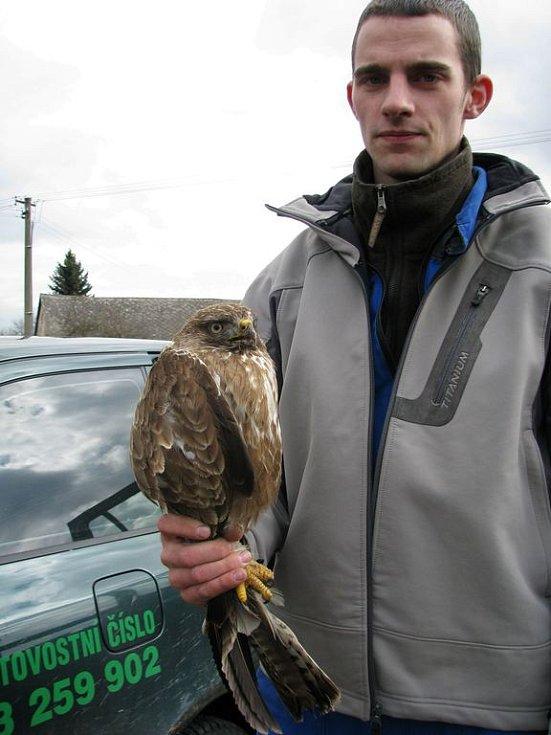 Pavel Šedivý se zraněnou kání lesní, kterou s největší pravděpodobností srazilo projíždějící auto. Dravce sedícího uprostřed kruhové křižovatky v Rožmitále si všiml řidič.