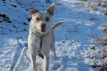 Roční kříženec Ralf, krásný, velký pes se spoustou energie, který se hluku z petard a ohňostrojů taky bojí, ale věří nám a tak si jen  položí na nás hlavu a čeká, než to odezní.