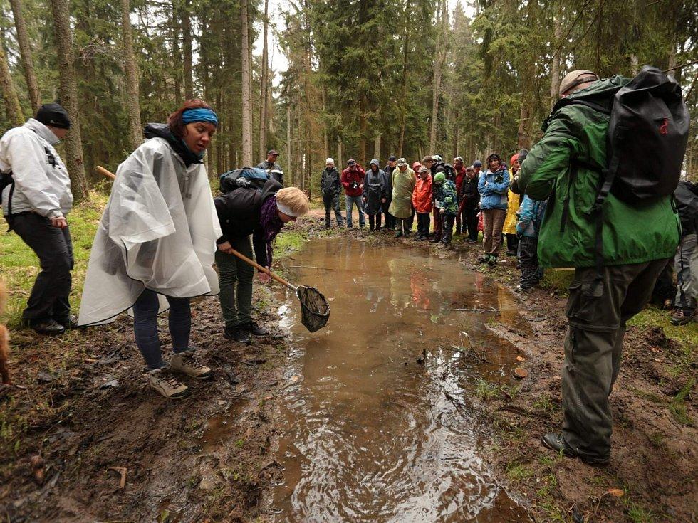 Ani déšť neodradil téměř stovku zájemců o vycházku do Brd.