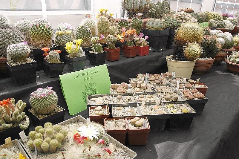 Výstava kaktusů v Příbrami.