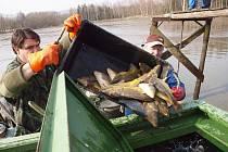 Rožmitálští rybáři slovili o víkendu Velký kotelský rybník a také Sadoňský.