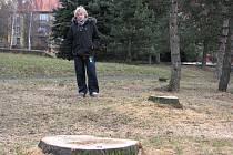 Kácení stromů za Družbou.