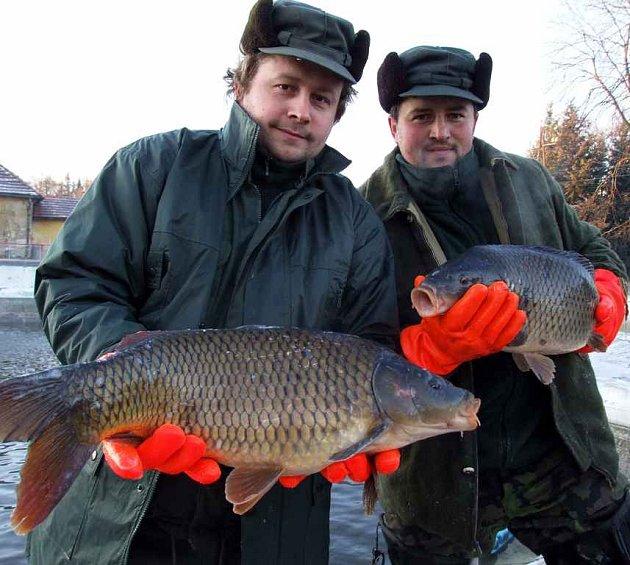 Přestože se lidé naučili kupovat i jiné druhy ryb, kapr má stále silnou pozici na vánočním trhu.