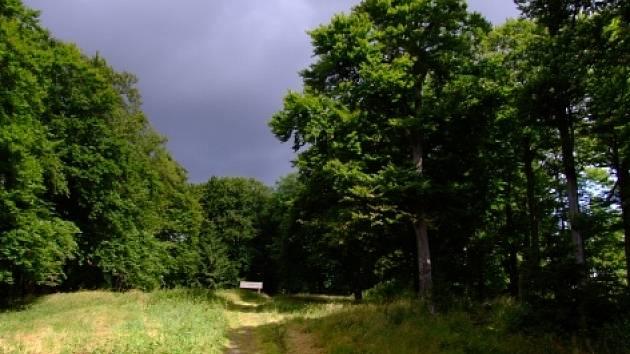 Stromy při stezce vedoucí k vrcholu Třemšína.