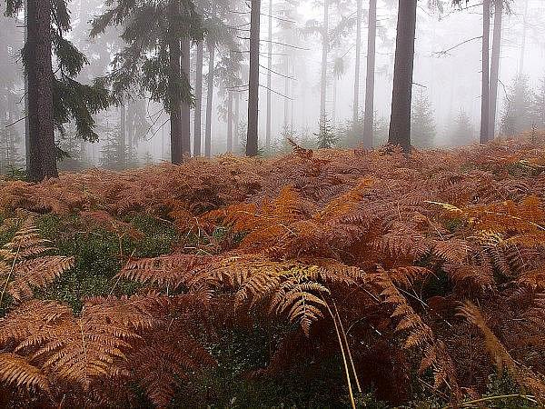 Podzim ve Středních Brdech.