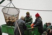 Výlov začínal kolem sedmé hodiny a během dopoledne proběhl i druhý zátah sítí. S blížícím se polednem proud lidí mířící na hráz rybníka neustával, přicházely i rodiny s kočárky.