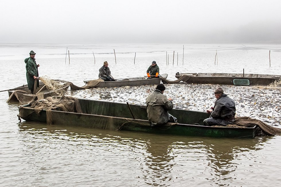 Výlovu Hořejšího padrťského rybníku ve dnech 6. a 7. listopadu přihlíželo velké množství diváků.