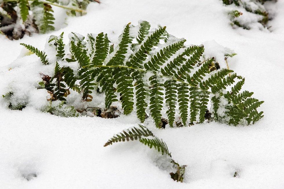 Zimní čas sebou přinesl sníh pro Brdy.