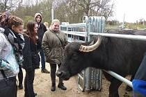 Agropodnikatelé Střední odborné školy v Březnici na buvolí farmě v Ohaři.