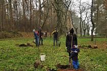 Dobrovolníci vysázeli v Kamýku u hradu 20 nových třešní.