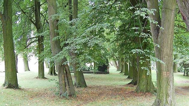 Označené stromy na návsi nejsou zcela v pořádku