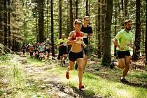 Běhej lesy Brdy.
