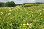 Za dva roky existence byla v CHKO Brdy udělána opatření pro přírodu za téměř 7,5 milionu korun z dotací Ministerstva životního prostředí Programu péče o krajinu. Zdroj: archiv AOPK