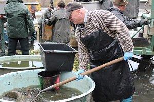 Sezóna výlovů je tady, na Dobříšsku se lovil Huťský rybník