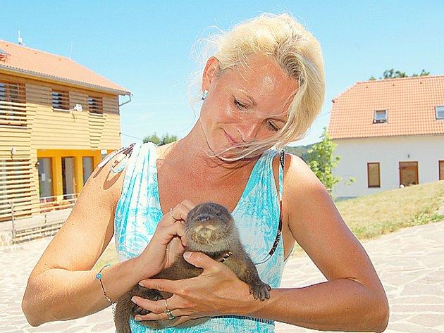 Lektorka ze stanice pro zraněná zvířata v Hrachově Jitka Kocíková s malou vydří pacientkou.