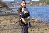 Ochránce vypouští uzdravenou labuť na svobodu.