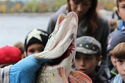 Dvoudenní výlov Huťského rybníka probíhal 11. a 12. října a podívat se přišly i děti ze ZŠ a MŠ Stará Huť.
