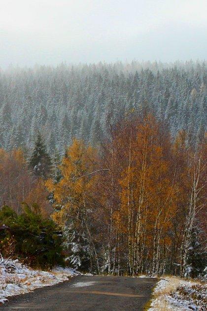 Díky této dohodě s VLS tak milovníci bílé stopy budou moci využít v Brdech cesty, na kterých se pravidelně drží nejhlubší sněhová pokrývka po nejdelší období roku. Sníh již v Brdech leží.