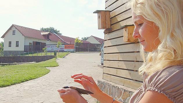 Lektorka stanice Jitka Kocíková vypouští na svobodu mladou vlaštovku.