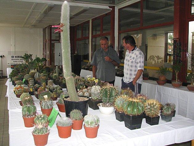 Výstava kaktusů v příbramském Q - klubu