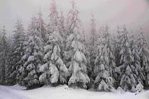 Na stromech je obzvláště ve vyšších polohách Brd spousty sněhu.