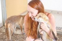 S liškou Eliškou je na snímku ošetřovatelka Bára Vykysalová.