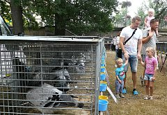 Povltavská výstava králíků, holubů a drůbeže. Zázemí pro zvířata začínají chovatelé připravovat již týden předem. Jako samozřejmost bere tuto brigádu také chovatelka Romana Žáčková s dcerou Kristýnou a další rodinní příslušníci.