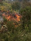 Řízené vypalování části vřesoviště.