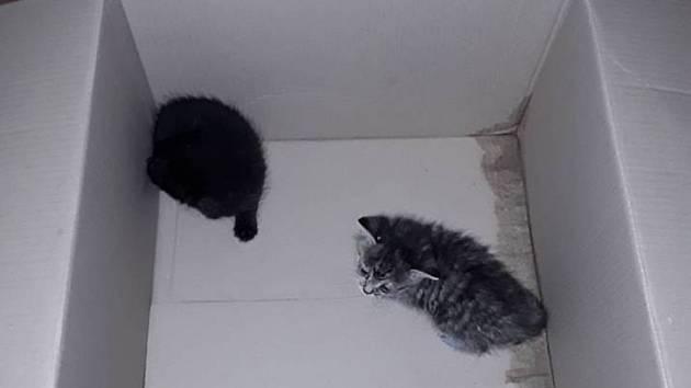 Malinká koťátka, když se hned nenajdou, tak umírají jednou z nejkrutější smrtí a to hlady a žízní.