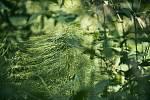 Běhej lesy, tentokrát v Brdech. Archivní foto ze závodu.