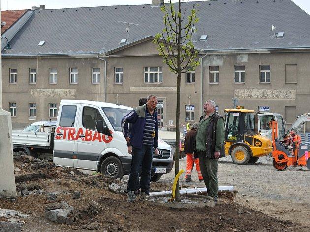 Výsadba nových lip na náměstí.