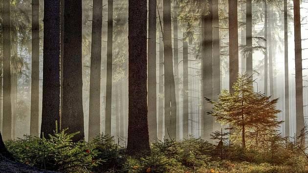 Brdská příroda.