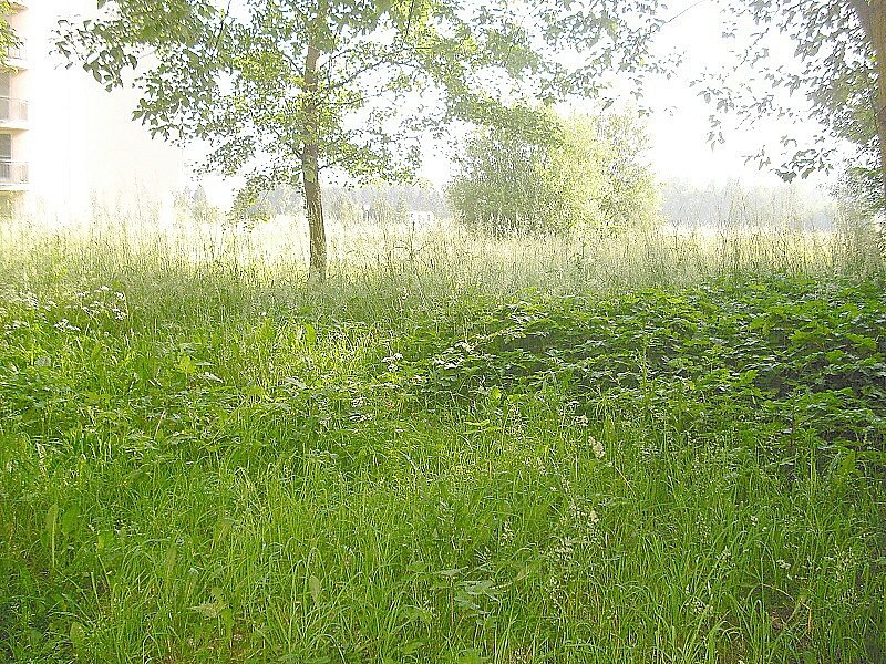Přerostlá tráva v okolí Brodské ulice.