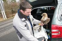 Ochrana fauny ČR také provozuje stanici, kde její zaměstnanci pomáhají zraněným zvířatům.