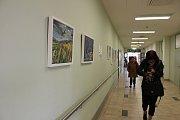 Od konce října až do konce roku si můžete v galerii příbramské nemocnice prohlédnout obrazy chirurga Josefa Dvořáka.