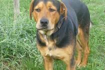 Marky, pes nalezený u Slivice u Milína.